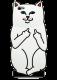 Чехол для iPhone 6 Cat